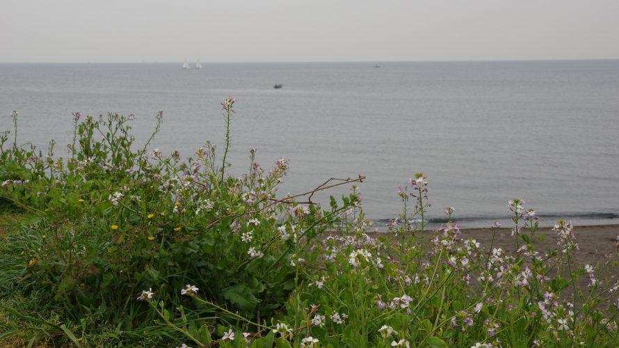 三浦半島の三戸海岸でカヤックフィッシング